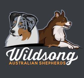 Wildsong Aussies Versatile Aussies Bred For Temperament